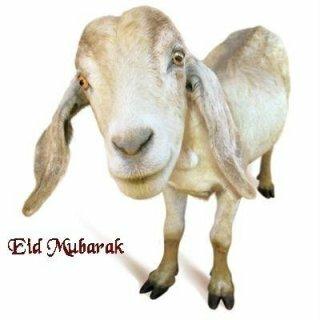 Bakra Eid Wallpapers of Bakra 2013