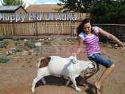 Badmash Bakra Funny eid wallpapers