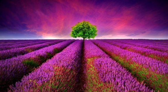 Beautiful Collection of 3D HD Nature Scene Wallpapers (1)