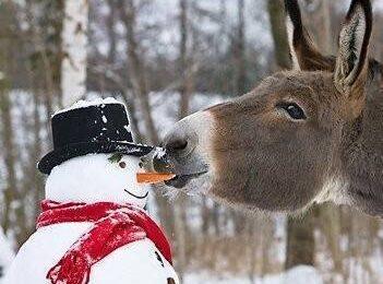 Funny Snowman, Funny Animal Wallpaper