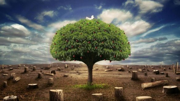 Alone Tree 3D HD Wallpaper Collection