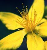 Beautiful yellow flower Nature HD Wallpaper
