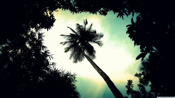 Palm Tree Nature Wallpapers Collection 2014