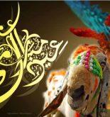Funny Bakra eid ul azha wallpaper collection
