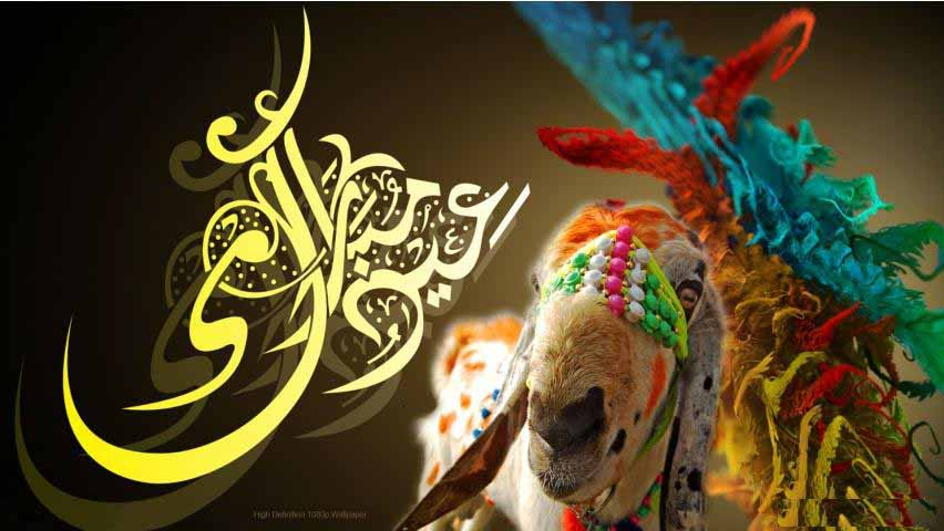 Funny Bakra eid ul azha wallpaper collection