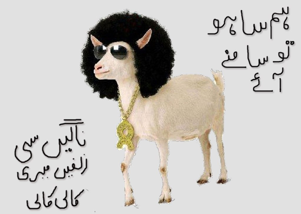 Stylish Bakra, Eid ul Azha wallpapers