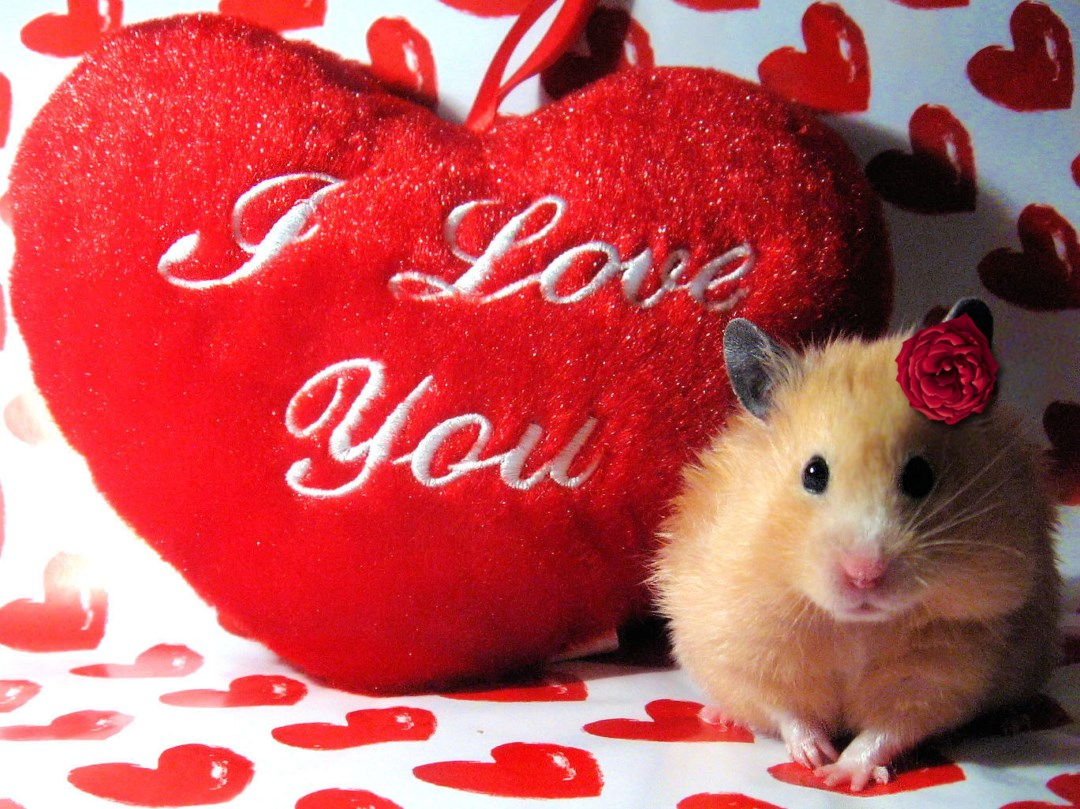 Happy Valentines Day HD Wallpapers With Toys