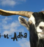 bakra-eid-funny-photo-2016
