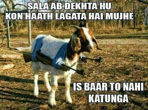taliban-bakra-photo, funny bakra photo
