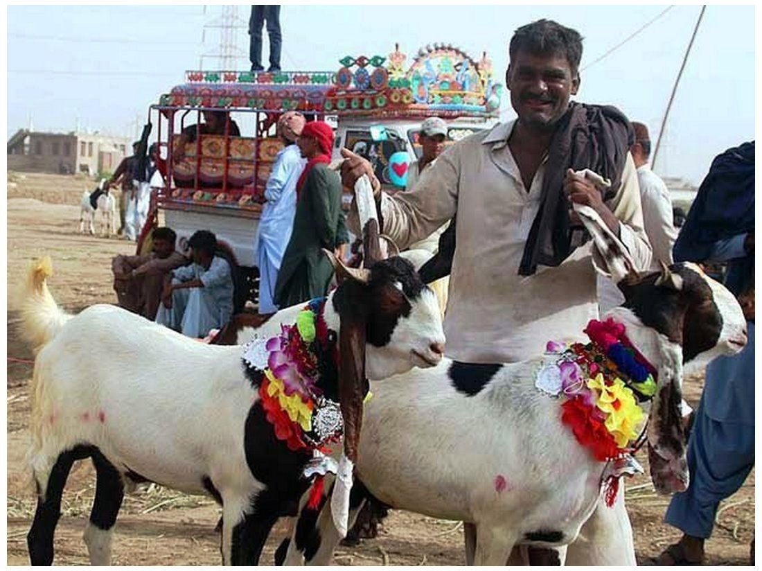Biggest Bakra Eid Qurbani Images