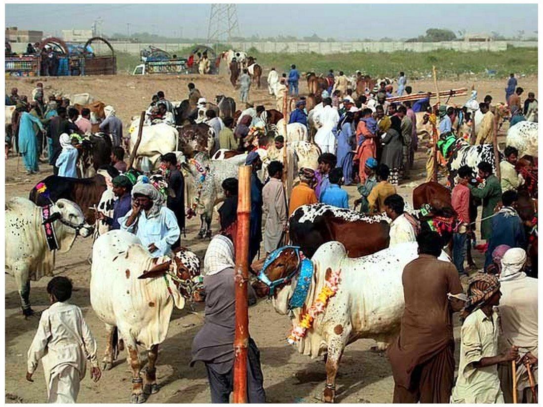Pakistan Cattle Market Images,